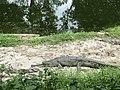 Central zoo, Jawalakhel6.jpg