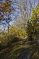 Cesta okolo rybníka - panoramio.jpg