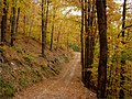Cesta pod hrebeňom - panoramio (1).jpg