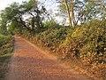 Chandraketugarh Mound - Berachampa 2012-02-24 2538.JPG