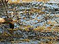 Chara - Flickr - treegrow.jpg