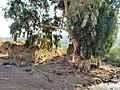 Chastelle - Metsar Ateret 1.jpg