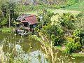 Chiang Rai Province P1110716.JPG
