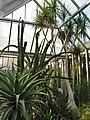 Chicago Botanic Gardens - Arid Greenhouse - panoramio.jpg