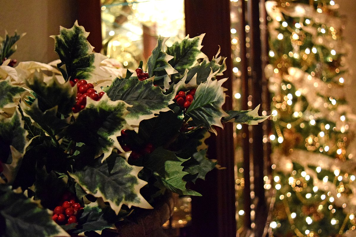 Christmas holly 2015.jpg