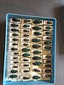 Chrysomelidae collection, Natural History Museum, London 14.jpg