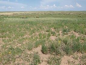 Cimarron grassland.jpg