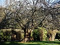 City of London Cemetery Memorial Gardens lawn tree and hedge 02.jpg