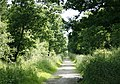 Clanger Wood - geograph.org.uk - 834638.jpg