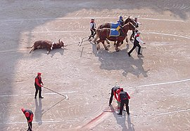 Cleaning up after bullfight.jpg
