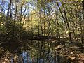 Coldwater River nature trails 3.jpg