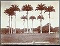 Collectie Nationaal Museum van Wereldculturen TM-60062368 Plein met palmen en het standbeeld van keizerin Josephine, Fort de France Martinique J. Murray Jordan (Fotograaf).jpg