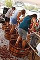 Concours de foulage de raisins.jpg