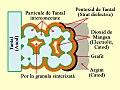 Condensator electrolitic din Tantal sinterizat.jpg