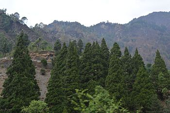 Conical Forest in Nainital.jpg