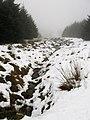 Conifer Plantation - geograph.org.uk - 336541.jpg