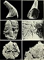 Conodont ultrastructure - the subfamily Acanthodontinae (1975) (20654519036).jpg