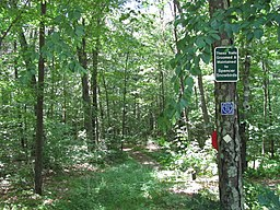 Corridor 71, Spencer State Forest, Spencer MA.jpg