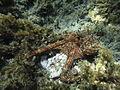 Costa Cabo de Gata 61.JPG