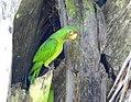 Costa Rica DSCN2828-new (31129938155).jpg