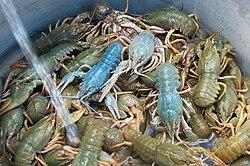 crayfish - Wiktionary