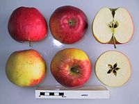Cross section of Ambro, National Fruit Collection (acc. 1998-014).jpg