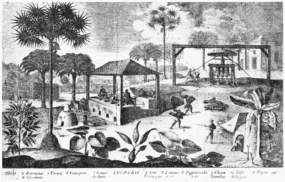D072- une sucrerie à saint-domingue - Liv3-Ch16