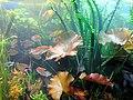 DSC26510, Monterey Bay Aquarium, California, USA (8150946974).jpg