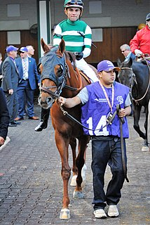 Accelerate (horse) Thoroughbred racehorse trained in the United States