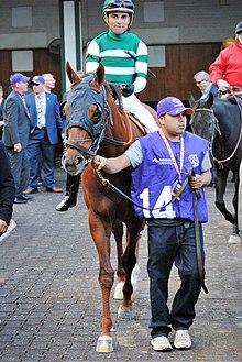 Accelerate (horse) - Wikipedia