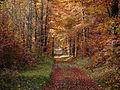 D Waldshut Tiengen Herbst.JPG