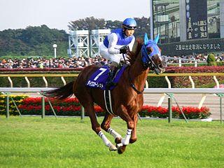 Daiwa Scarlet Japanese-bred Thoroughbred racehorse