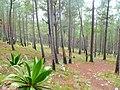 Dans la forêt de Parc National La Visite - panoramio.jpg