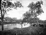 Darling River near Brewarrina (2376052559).jpg