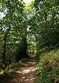 Dart Valley Trail, Long Wood - geograph.org.uk - 1508238.jpg