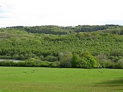 Darwell Wood - geograph.org.uk - 1289806.jpg