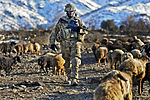 Defense.gov News Photo 120209-A-8536E-490 - U.S. Army Staff Sgt. Jonathan Price conducts a security patrol near the village of Narizah in Afghanistan s Tani district on Feb. 10 2012. Price.jpg