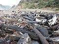 Del Norte Coast Redwoods SP driftwood.jpg