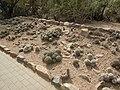 Desert Botanical Garden Phoenix Arizona 5.JPG