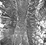 Desolation Glacier and Lake, fragmenting ice in the lake, September 16, 1966 (GLACIERS 5416).jpg