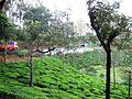Devarshola Road (4650473167).jpg