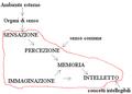 Diagramma di flusso dell'elaborazione dell'informazione secondo aristotele.png