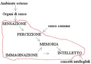Diagramma di flusso dell'elaborazione dell'informazione secondo Aristotele[26]