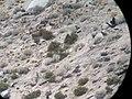 Diaz winter range, 2007 (5507028611).jpg