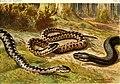 Die Reptilien und Amphibien mitteleuropas (1912) (20942516855).jpg