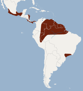 Distribution of Glyphonycteris sylvestris.png