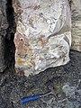 Dolostone (Rockford Limestone, Lower Mississippian; Burkesville West Rt. 90 roadcut, Kentucky, USA) 3 (46570338852).jpg