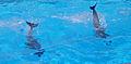 Dolphin 3.jpg
