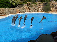 Dolphins at Loro Parque, Tenerife.