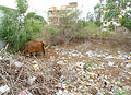 Domestic waste at Madhurawada in Visakhapatnam.JPG